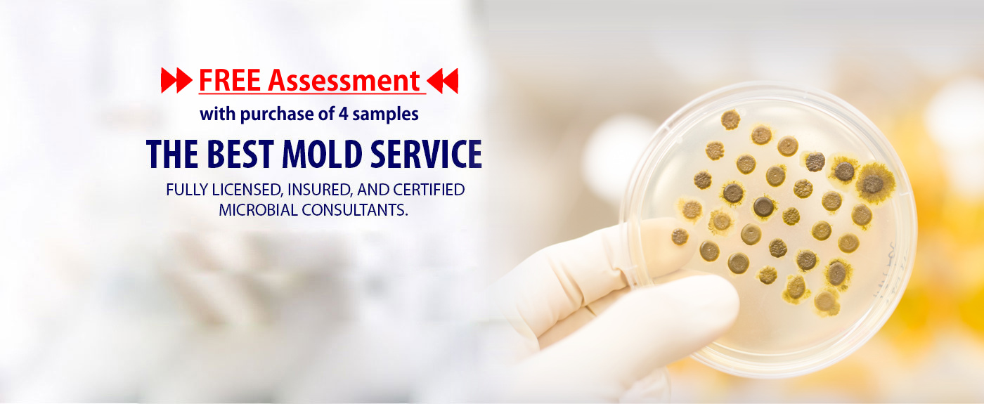 Mold Inspection Testing Detection Inspectot